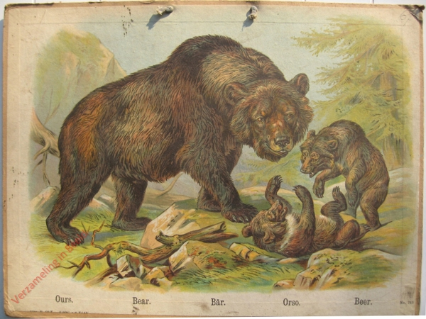 743 - Ours, Bear, Bar, Orso, Beer